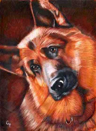 German Shepherd2